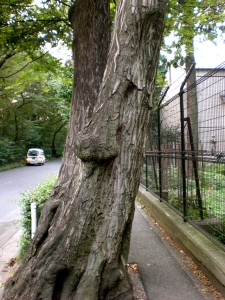 doesn't this look like one of the talking trees form Lord of the Rings?! ha!