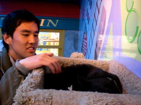 kirk + kitteh