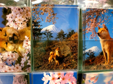 Spring in Japan postcards: Cherry blossoms and Shibas, of course.