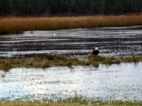 We saw this huge eagle swoop down and catch a fish, eat it, and then do it again!