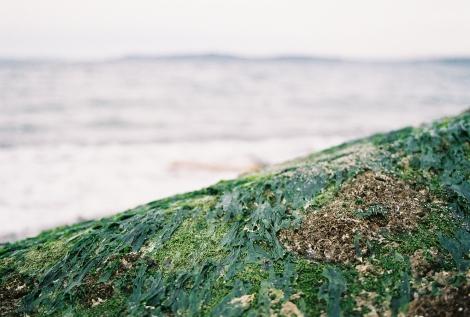 Seaweed focus