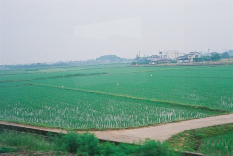 We passed by miles and miles of rice fields. Rice fields are really the most beautiful shade of green I can think of but if you've never seen one you wouldn't know it from looking at this blueish picture. Haha oh how I love my camera.